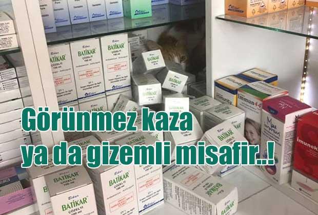 ilac-kutularinin-arkasina-saklanan-kedi-surpriz-yapti